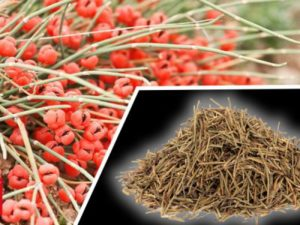 Ephedra weight loss is unsafe!