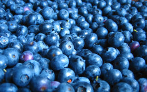 Lots of yummy blueberries